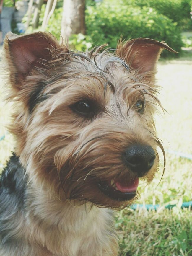 Dog Love Friends Photography Tagsforlikes Likeforlike Happy Life Nature Beautiful 😄👍