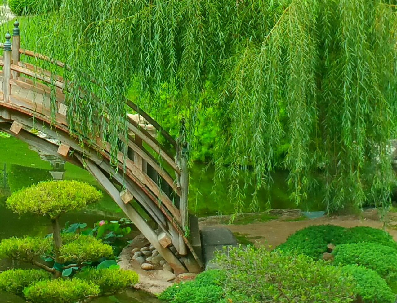 Peaceful My Walk, What I Love To Do Relaxing Moments Tranquil Scene Serene Outdoors Tree_collection  Garden Architecture Garden Photography Natural Beauty Nature_perfection Nature_collection Showcase: January Bridge Wooden Bridge