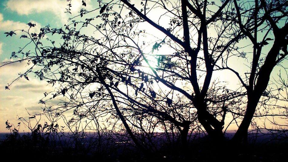 TreePorn Sz'ers Community Xperia Ray Sun Set