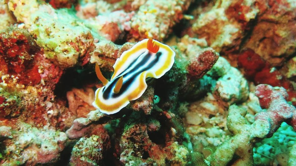 Sea slug Underwater Photography Cressi