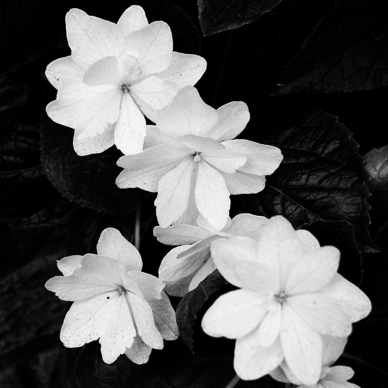 delicate beauty in The Castro...San Francisco EyeEm San Francisco Meetup July 2013 Blackandwhite