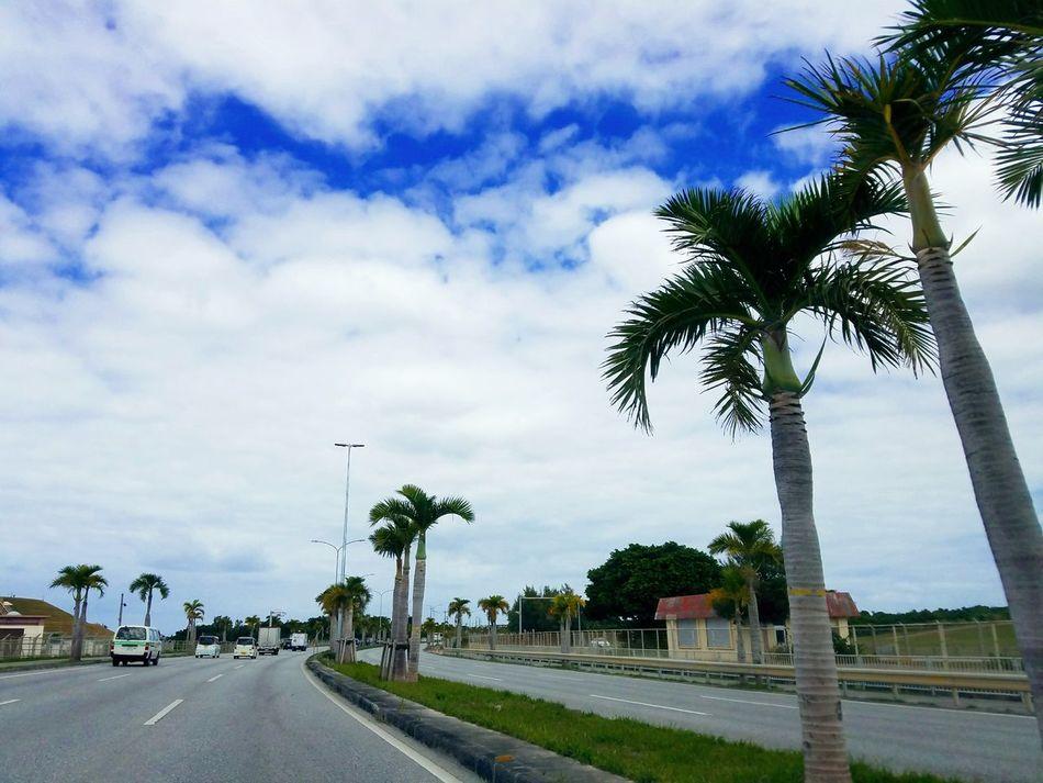 Tree Palm Tree Cloud - Sky No People Outdoors Day Nature Sky Okinawa Close-up Road Kadena Air Base