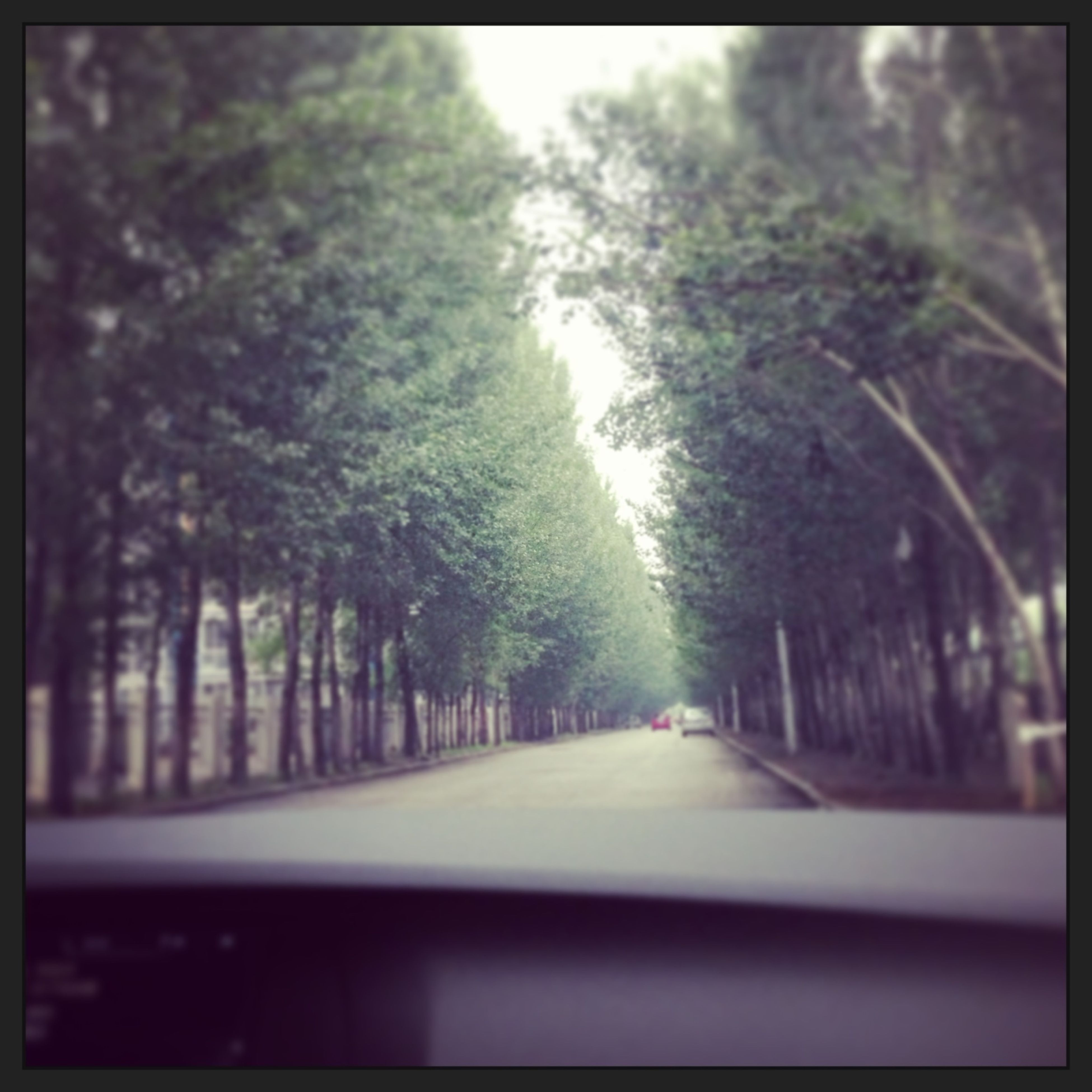 tree, the way forward, diminishing perspective, transportation, road, transfer print, vanishing point, growth, auto post production filter, treelined, street, nature, day, outdoors, long, sunlight, no people, empty, sky, tranquility