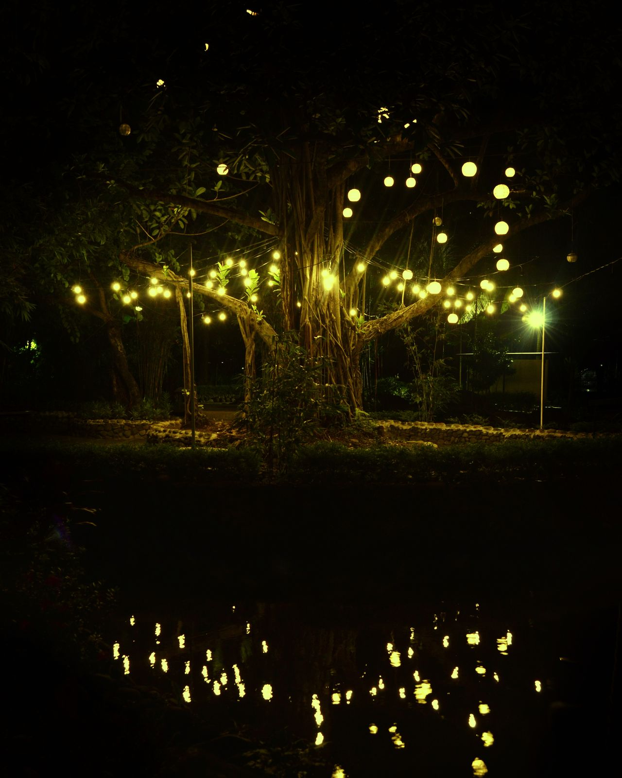 Magical Tree in Urban Garden.Tree Full Of Lights Tree Reflection Night No People Outdoors Nature Water Illuminated Feels Like Magic Magical Magical Moment Exeptional Photographs Eye4photography  Hello World Check This Out!