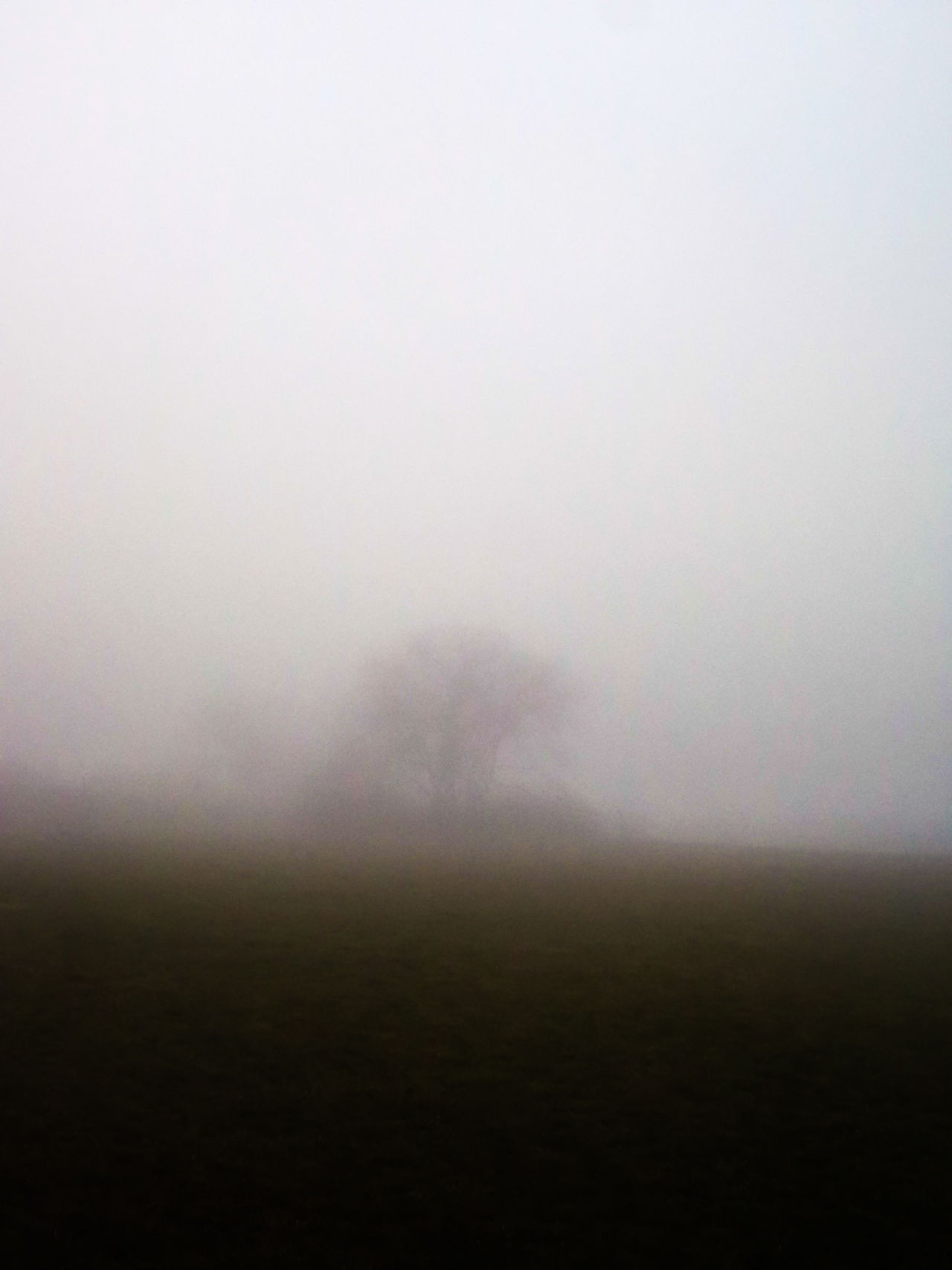 Foggy Morning Nature EyeEm Nature Lover Nature_collection EyeEm Gallery
