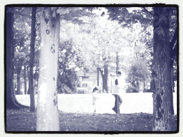 昼下がりの遊歩道 Black And White Autumn Nature