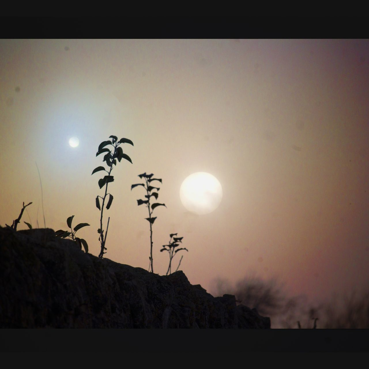 Sun Tree Moon Sky No People Outdoors Nature Rural Edgelands Edit Dream Nostalgia Cloud - Sky Scifi Dreamlike Composite Occult Moody Sky Memory Art Dreams Full Moon Sunset Silhouette Animals In The Wild