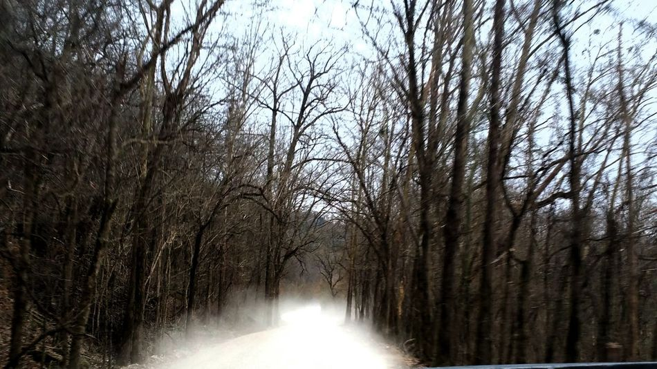 Tree No People Growth Nature Tranquility Beauty In Nature Bare Tree Low Angle View Outdoors Branch Scenics Sky Day Dirt Road Photography Driving The Back Roads Drivebyphotography Drivingshots Tree Dust In The Wind Dusty Road Looking Out Of The Window Looking Back,moving Forward