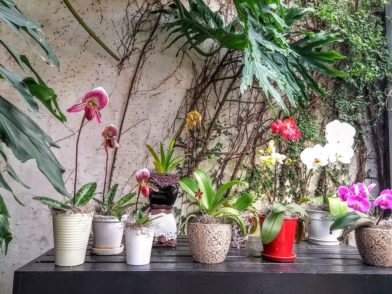 Beautiful stock photos of orchid,  Botany,  Day,  Flower,  Flowering Plant