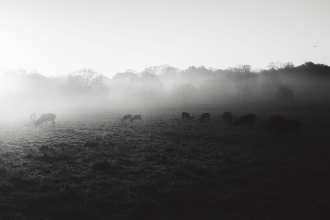 Miles Away || it's been a while since I've posted. How's everyone doing? I'm working some really exciting projects this year, which I'll be telling you more about soon... 🙏🏽 Landscape Beauty In Nature Nature Animal Themes Travel Destinations EyeEm Best Shots Landscape_Collection Blackandwhite