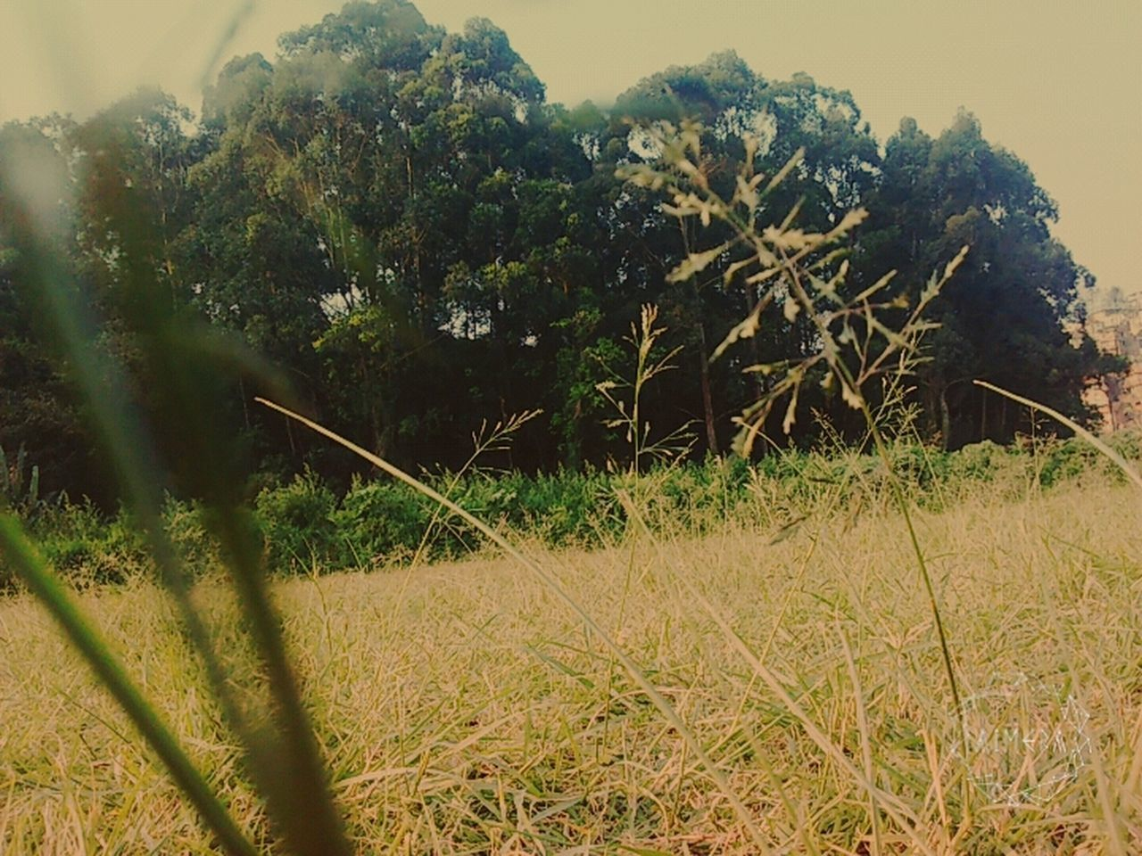 growth, nature, no people, day, field, tree, tranquility, outdoors, plant, beauty in nature, grass, landscape, scenics, sky, close-up