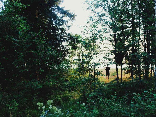 🌲🌲🌲🌲 TheWeekOnEyeEM Outdoors Trees Green Outdoor Tranquil Scene Forest Silhouette Hidden Gems