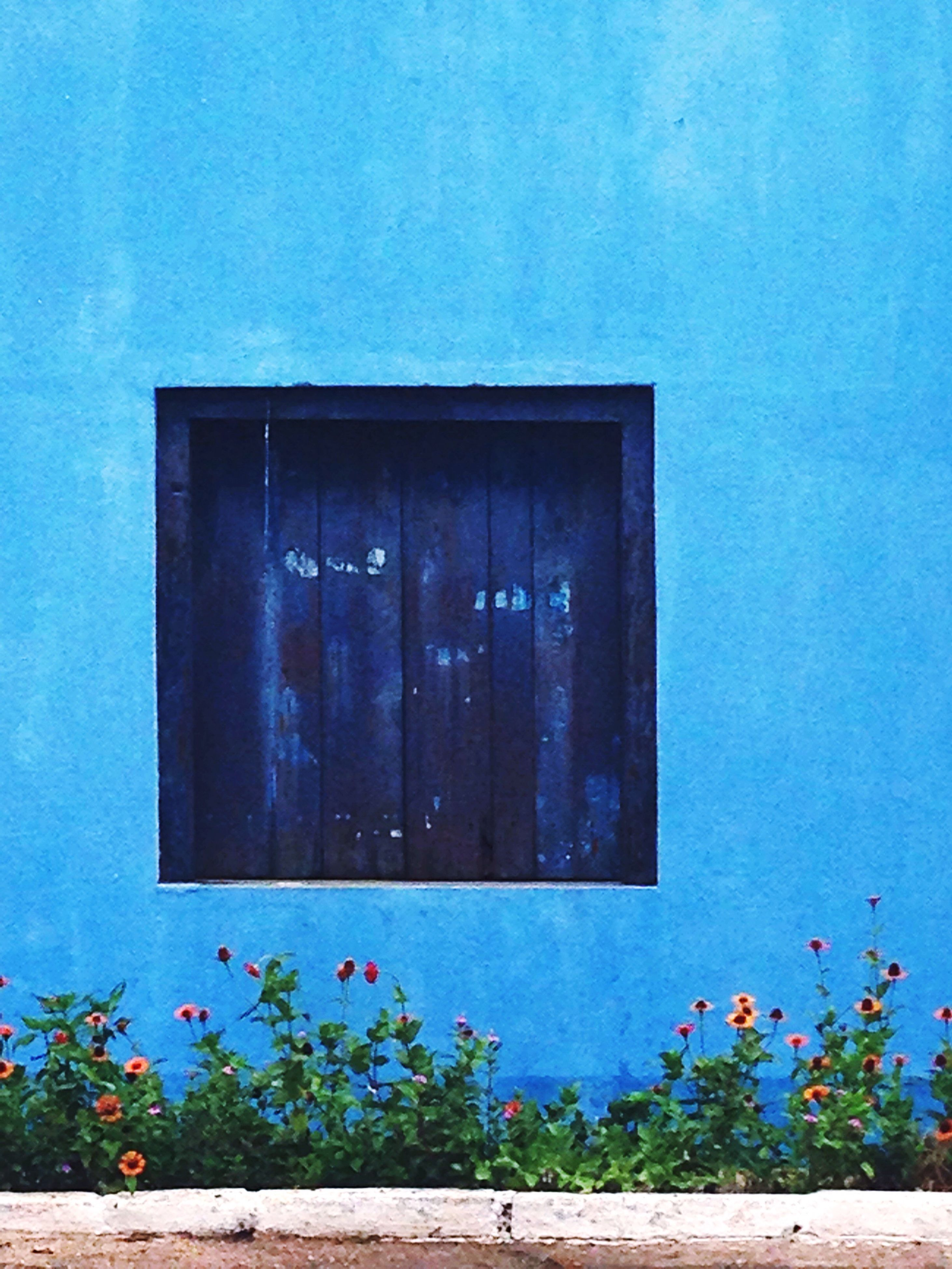 built structure, architecture, building exterior, blue, closed, wall - building feature, door, house, plant, wall, window, flower, growth, day, wood - material, no people, outdoors, potted plant, residential structure, green color