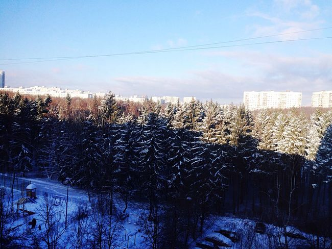 Обожаю этот лес с детства? Winter Forest