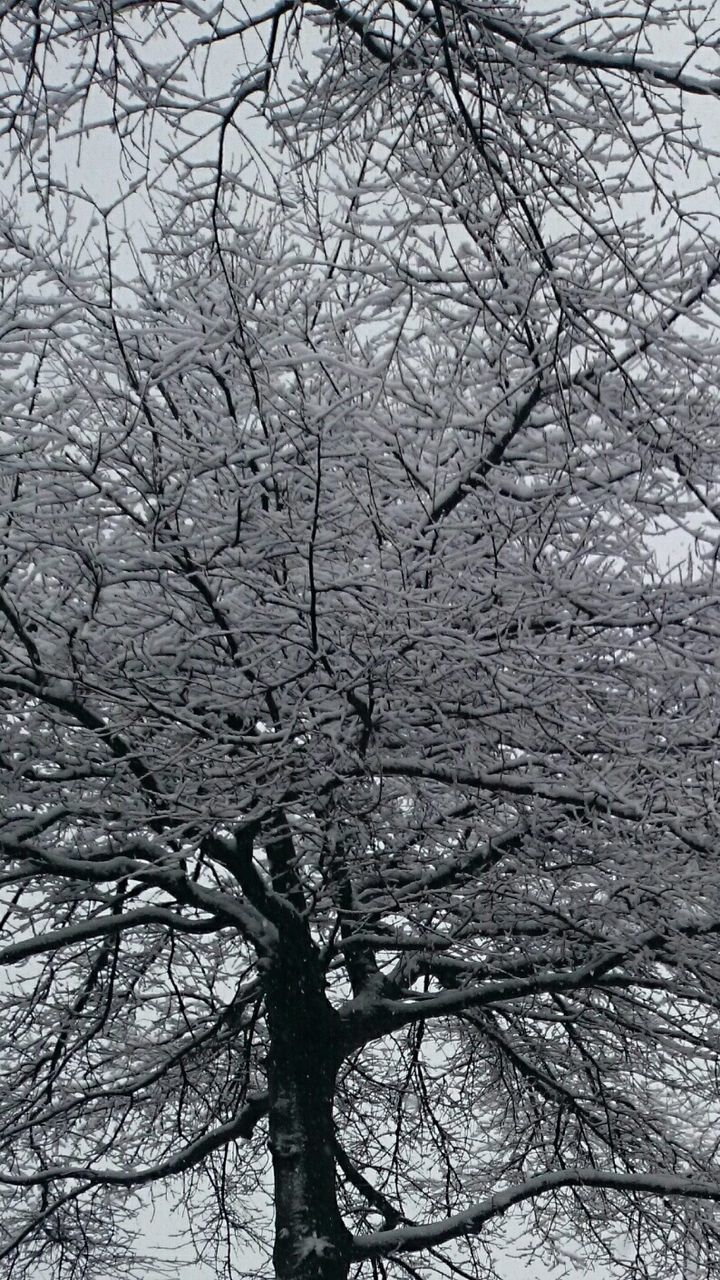 Frozen Bare Trees During Winter