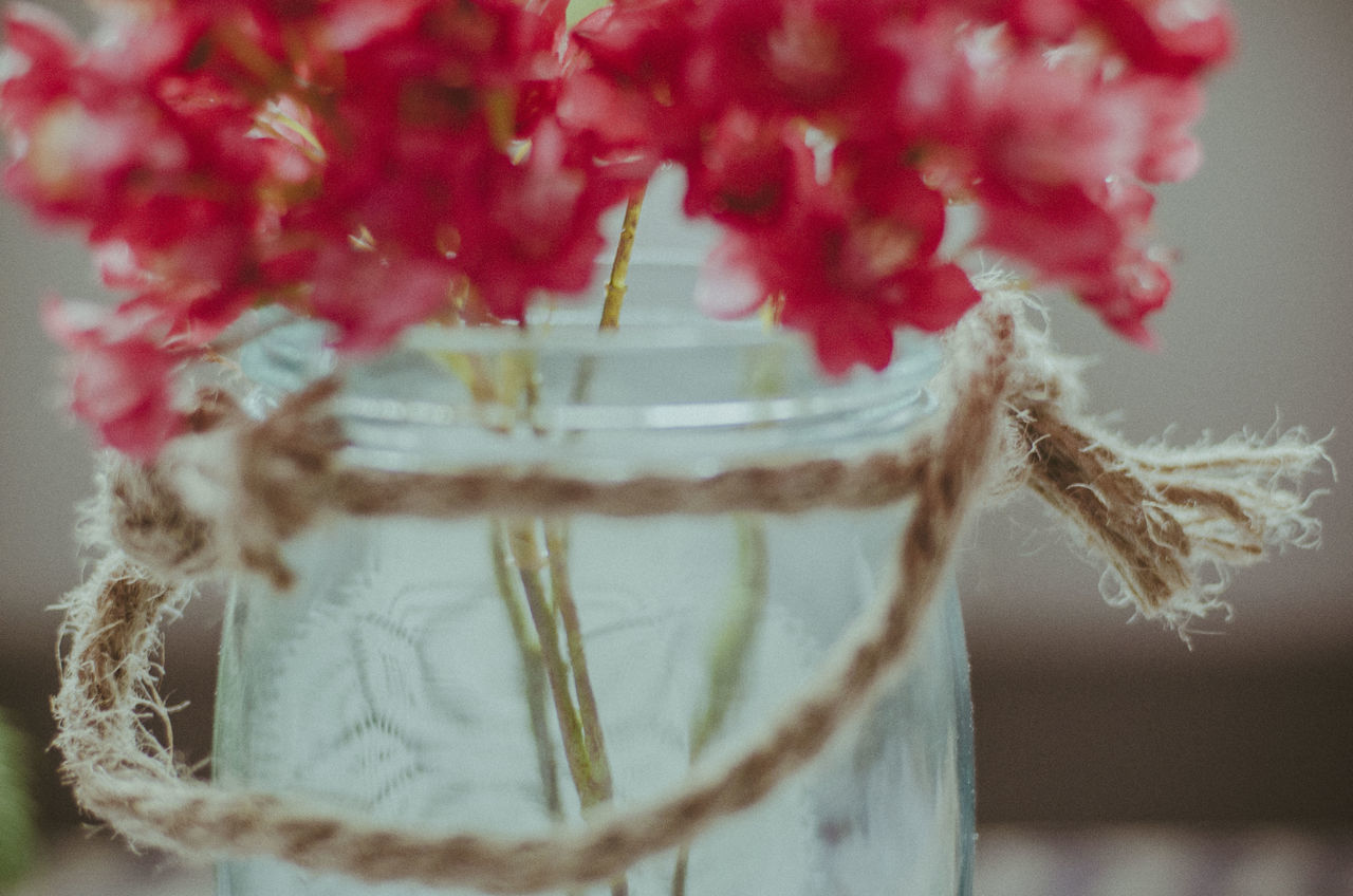 Beautiful Close-up Day Flowers Freshness Home Is Where The Art Is Home Sweet Home Indoors  My Own Photography My Own Style Of Beauty My World No People Presets Softness