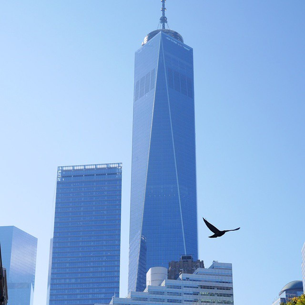 Newyork Architecture Skyscrap Summer Arkitektur Skyskrapa Sommar ImagesofNYC Blue Sky Bird