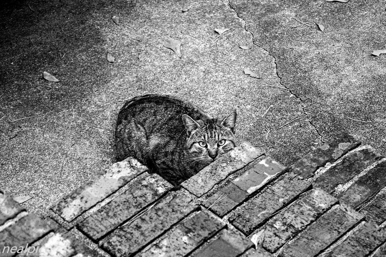 Animal Themes Black And White Cat Cats Of EyeEm Cat♡ Close-up Day EyeEm Gallery EyeEm Nature Lover High Angle View Mammal Nature