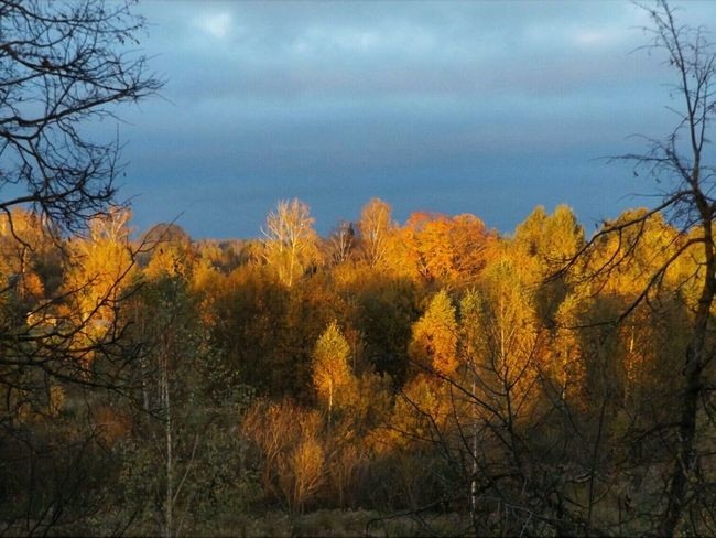 Tree Nature Sky Beauty In Nature Yellow Outdoors Latvia Jelgava October Sunset Landscape