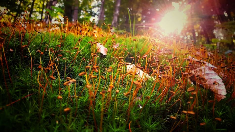 Beauty In Nature Close-up Day Grass Growth Nature No People Outdoors Plant Sun Sunbeam Sunlight Tranquility