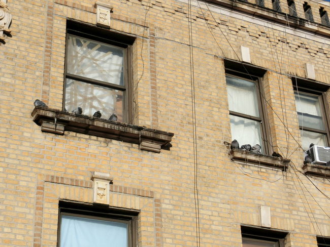 Pigeons Windows EyeEm Selects Architecture Window Built Structure Building Exterior Low Angle View No People Day Outdoors