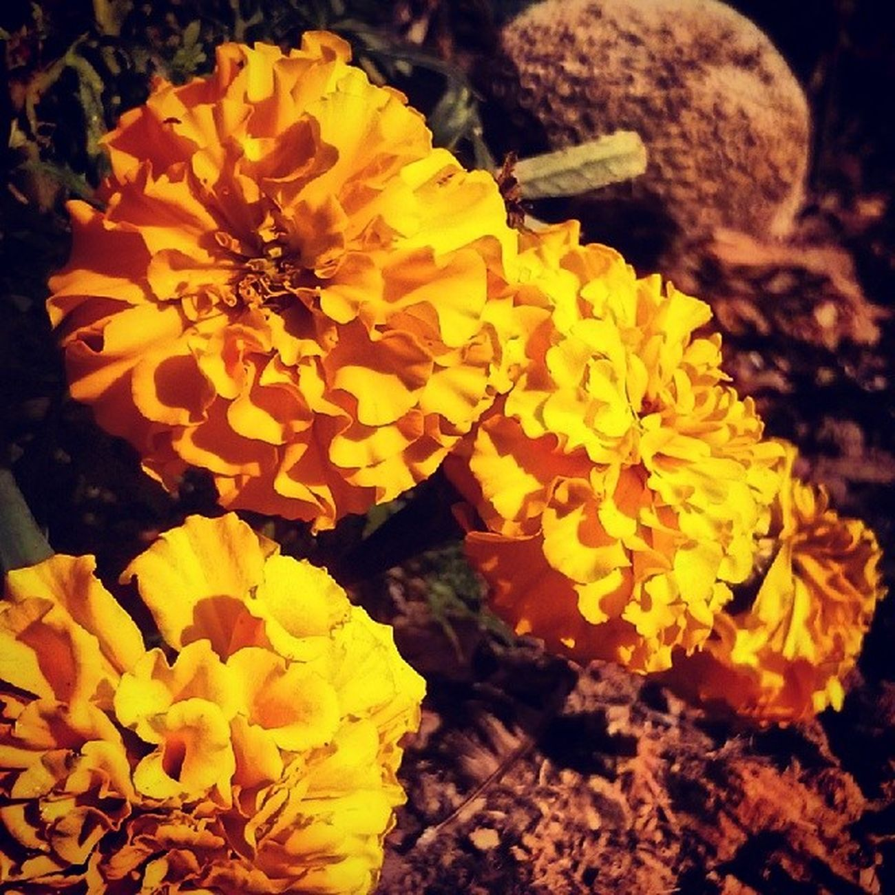 Flowers! MacroLadilla