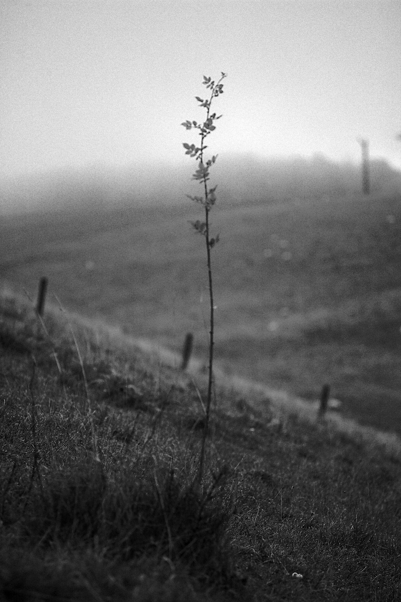 The Infant Black & White Blackandwhite Fog Hills Tree