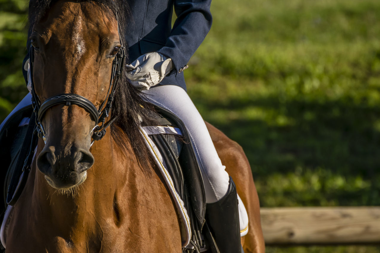 Beautiful stock photos of pferde,  Agility,  Balance,  Boot,  Bridle