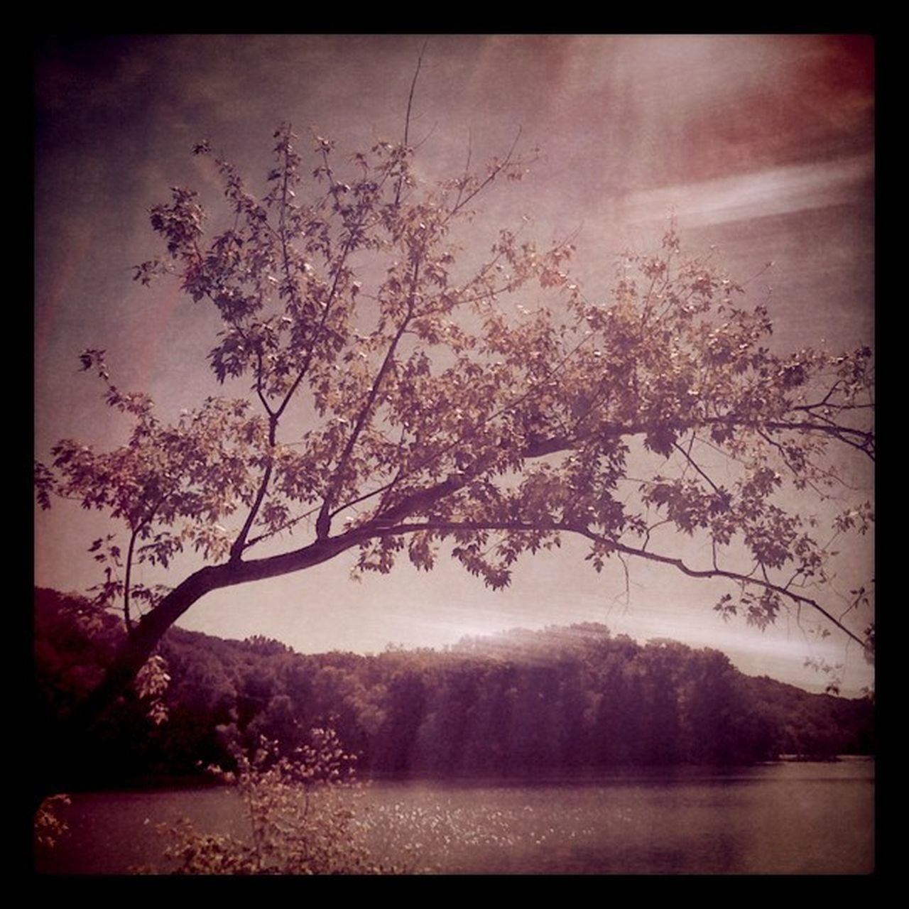 tree, beauty in nature, nature, branch, tranquility, no people, scenics, lake, flower, tranquil scene, water, sky, outdoors, growth, day, fragility, freshness