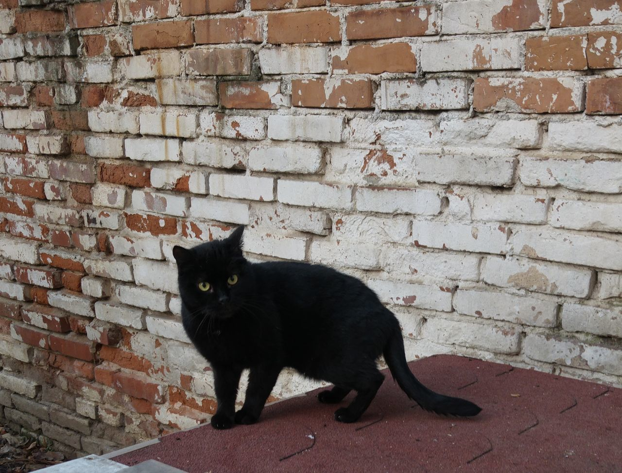 domestic cat, brick wall, cat, feline, black color, domestic, pets, portrait, mammal, no people, outdoors, domestic animals, animal themes, day