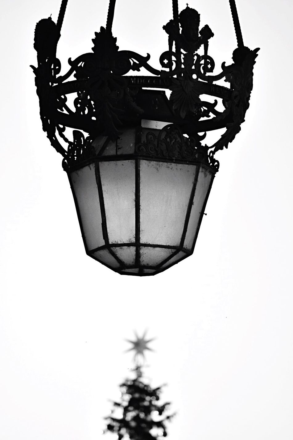 S.Peter Square at Xmas. Rome, Italy. Low Angle View No People Outdoors Day Black & White Silhouette Lamp Lamplight Xmas Tree Saint-Peter VaticanCity Rome