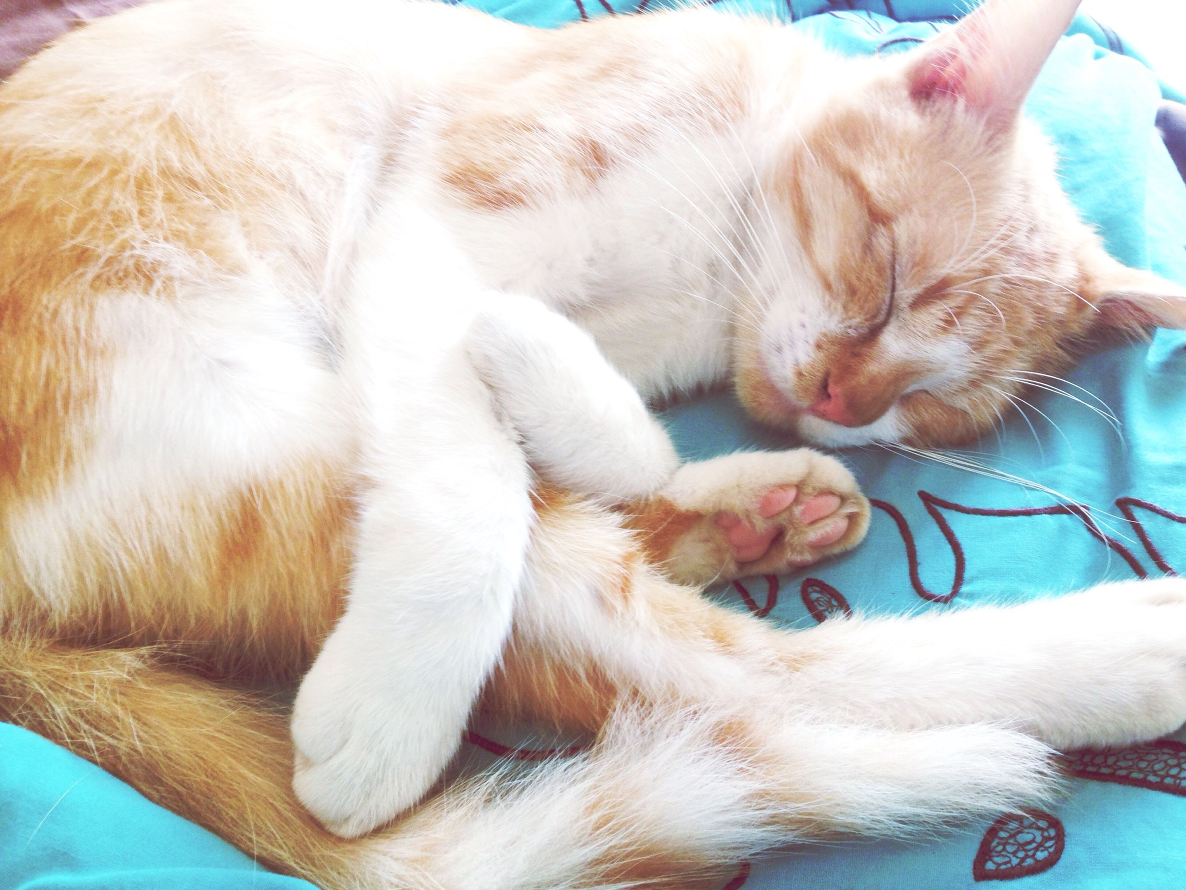pets, domestic animals, mammal, domestic cat, animal themes, cat, one animal, feline, relaxation, indoors, sleeping, resting, lying down, whisker, close-up, eyes closed, animal head, bed, high angle view, no people