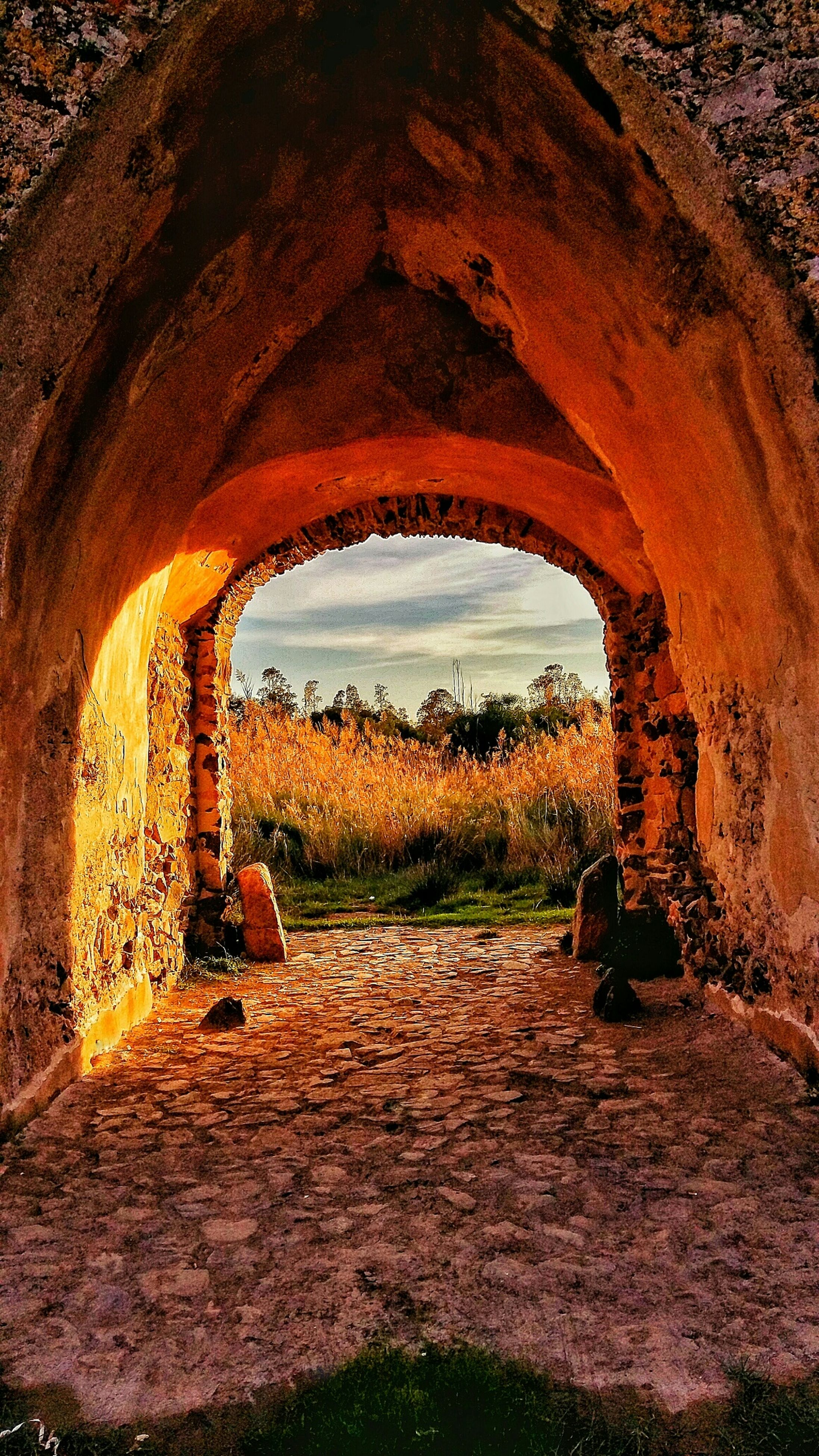 arch, architecture, built structure, old, stone wall, archway, old ruin, history, indoors, tunnel, abandoned, sky, wall - building feature, weathered, the past, day, tree, ruined, deterioration, damaged