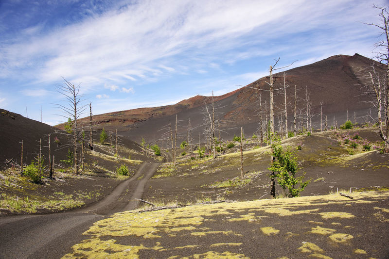 Road through dead forest in volcanic desert Beauty In Nature Cloud - Sky Day Far East Kamchatka Landscape Mountain Nature Nature Reserve No People Outdoors Russia Sky