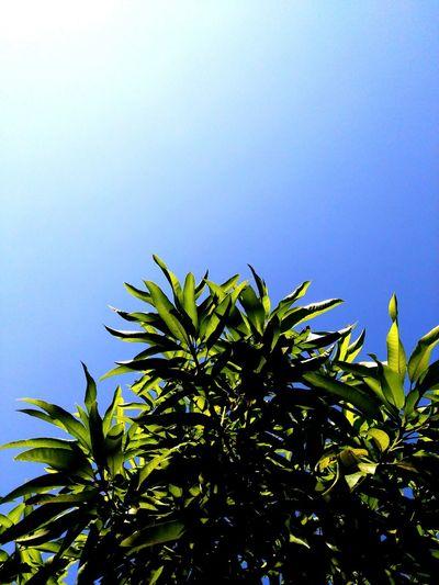 Leaves🌿 Blue Sky Cellphone Photography Beginnerphotographer Feeling Photographer Sunlight