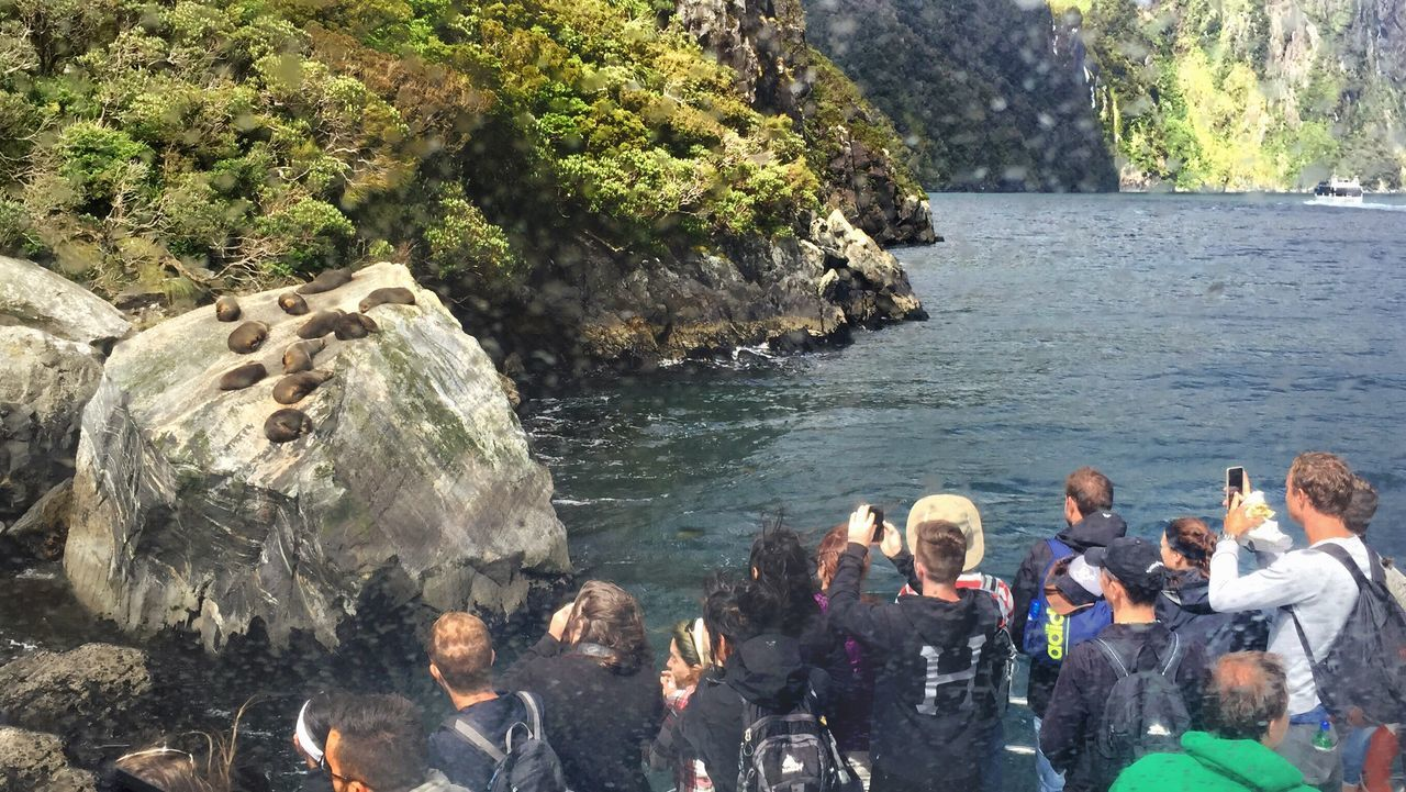 Catch a glimpse of sleeping fur seals at Milford Sound, New Zealand Miles Away Water Real People Rock - Object Lifestyles Large Group Of People Men Leisure Activity Fun Nature Day Sea Outdoors Friendship Beauty In Nature People Adults Only Tourist Destination Tourist Attraction  People Taking Photos