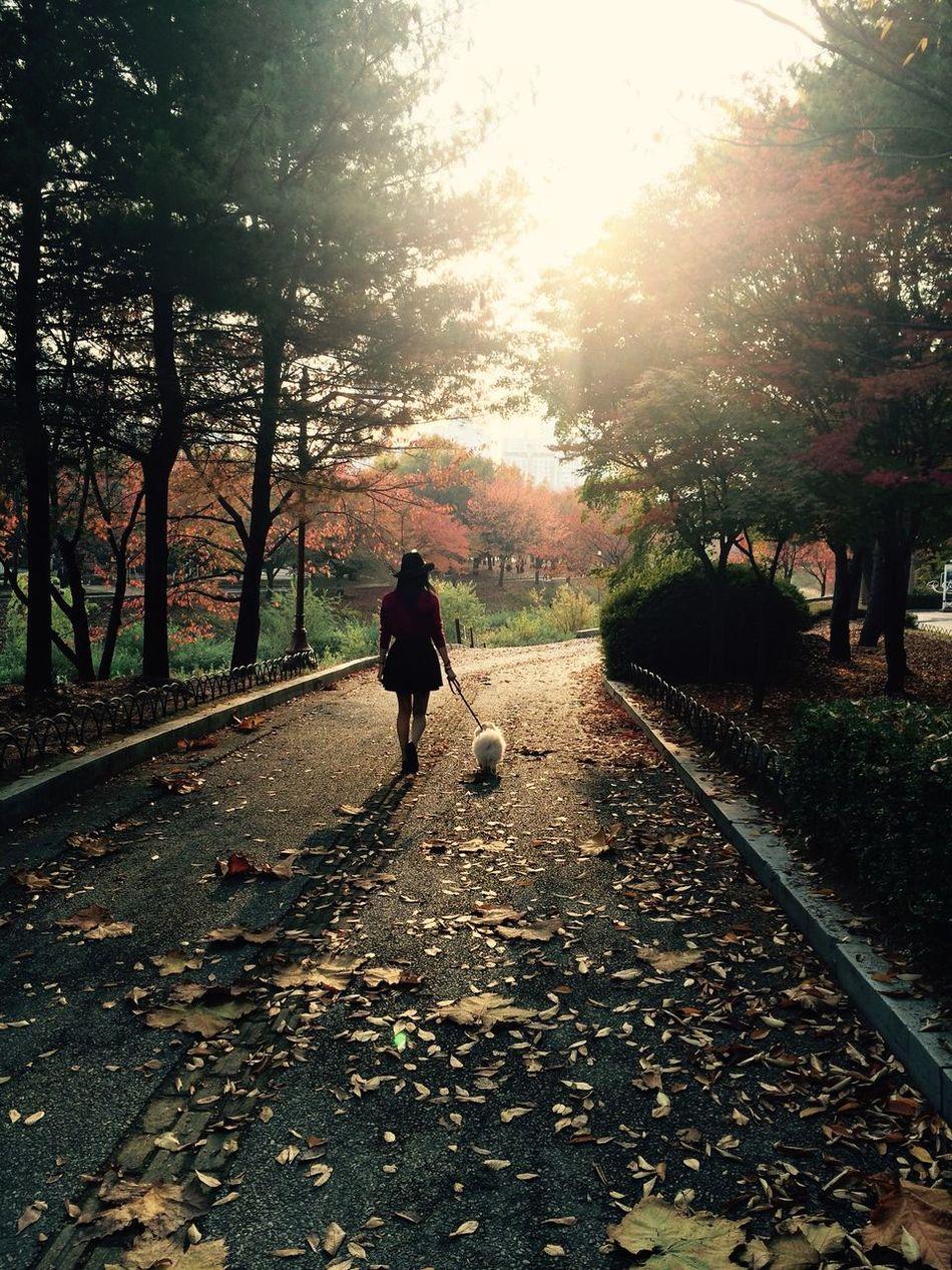 Dog Tree Trees Road Doggy Animal Themes Animal Girl Woman Sunshine Backlight Counterlight 개 강아지 반려동물 애완동물 나무 길 Animals 공원 Park 여자 소녀 역광 HDR