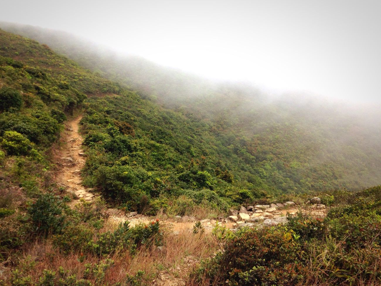 Hong Kong Trail Shek O Fog Nature Outdoors IPhoneography