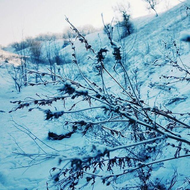 @AppLetstag зима снег Snow холод Природа холодно январь лед красота мороз Nature Winter Cold Ice Beautiful Weather L4l Freezing Mobilephotography Vscocam VSCO Macro Samsung Youmobile Vscogrid vscogood vscogram vscodaily vscophile vscobest