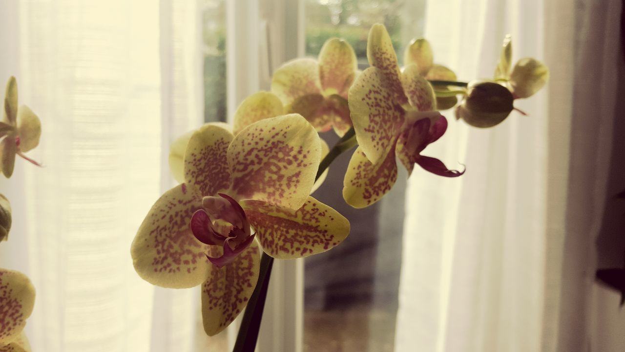 Beautiful orchidée...