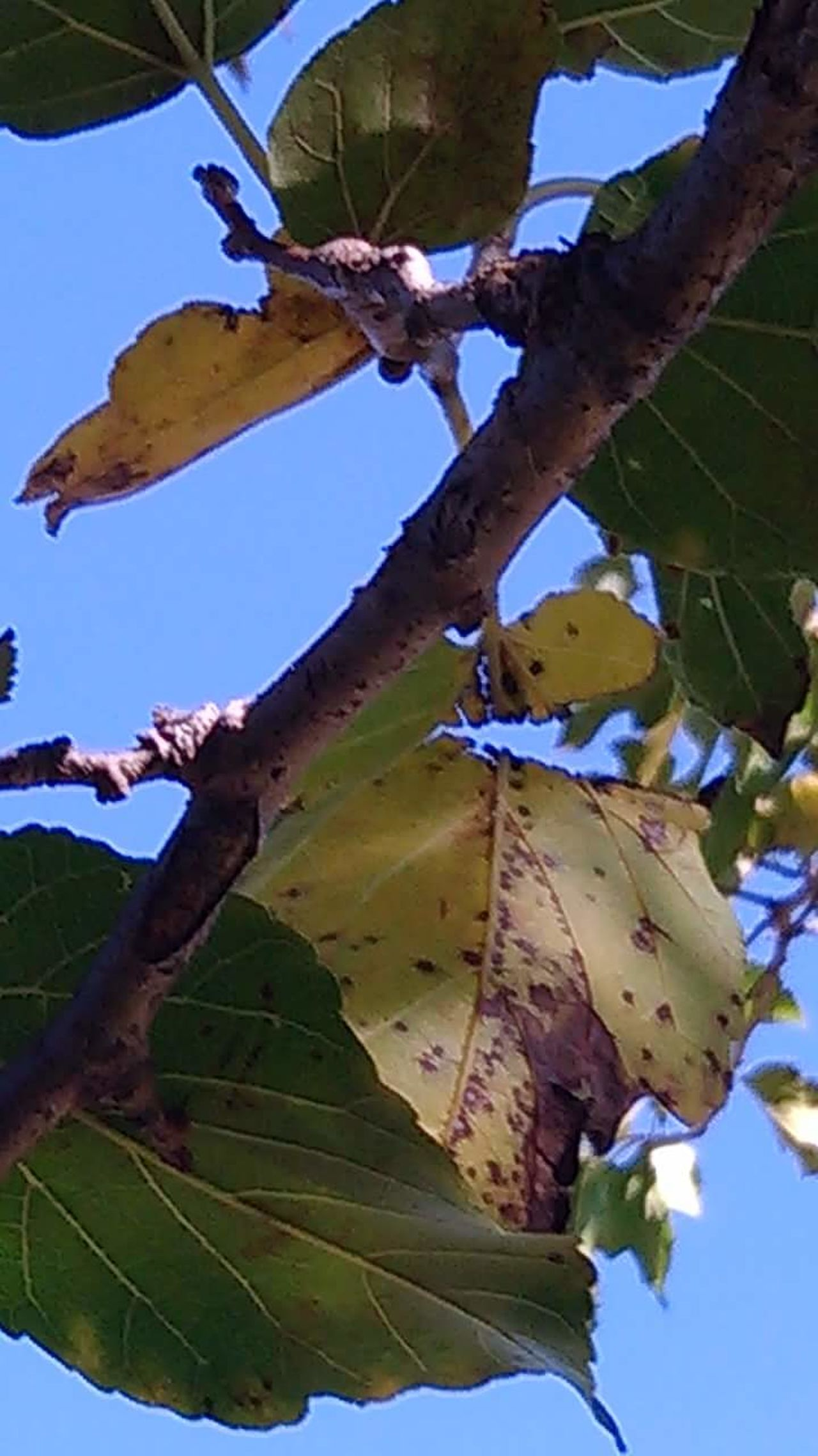 Outdoors Nature No People Leaf Tree Beauty In Nature Sky Day Beauty In Nature Close-up Plant Tree Low Angle View Mn