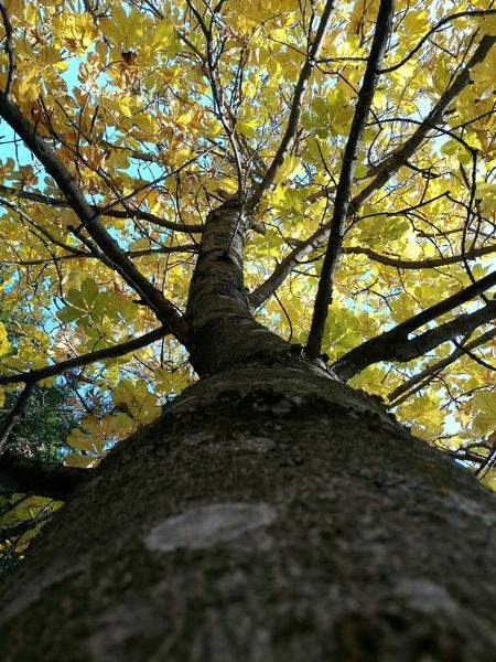 Tree Low Angle View Nature Tree Trunk No People Beauty In Nature Growth Outdoors Day Green Color Tranquility Sky Close-up