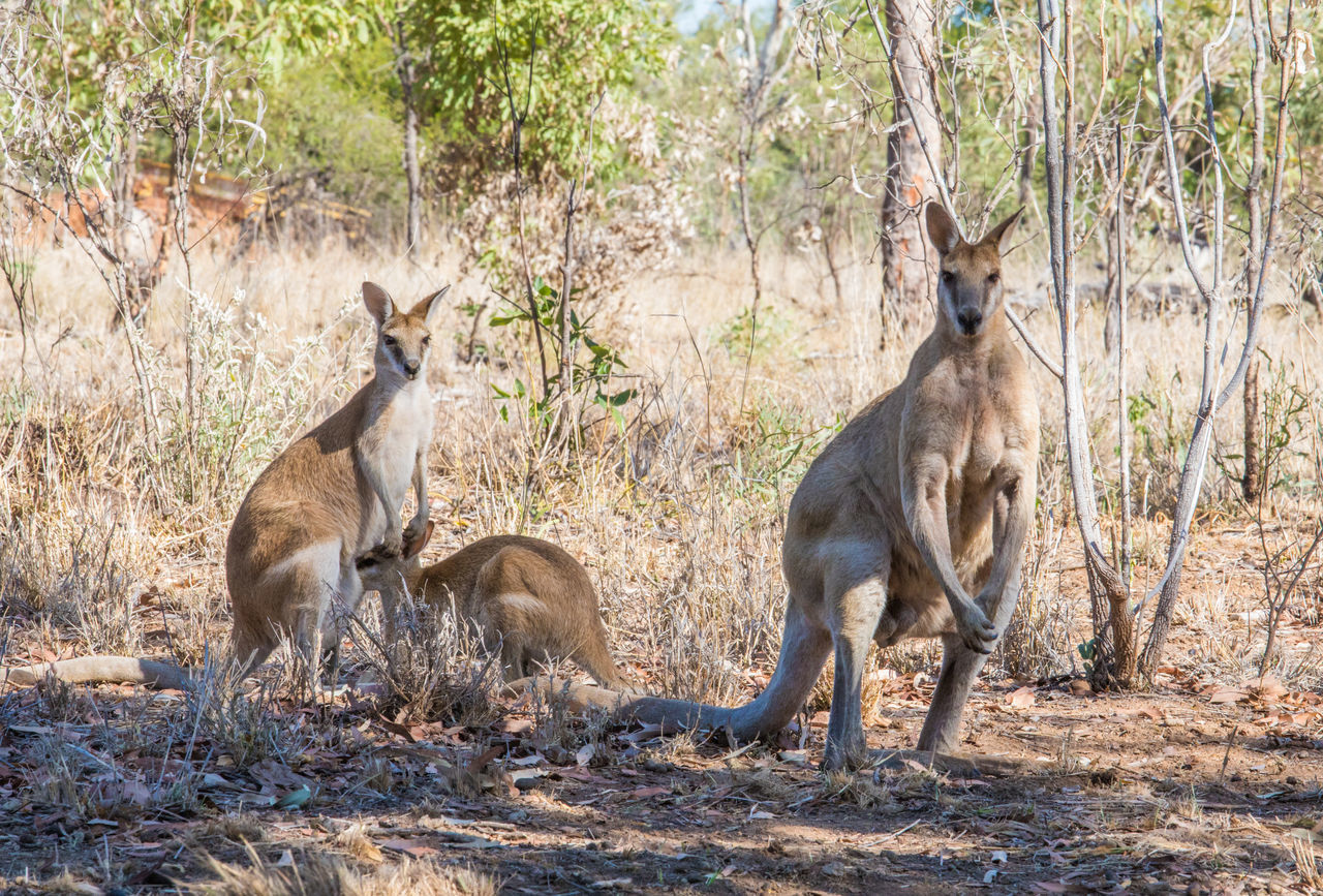 Animal Themes Animal Wildlife Animals In The Wild Beauty In Nature Family Grass Kangaroo Nature No People Outdoors Sunlight Tree Vacations