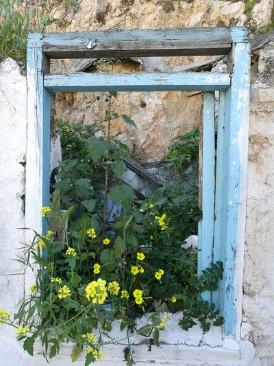 Flower Window Outdoors Building Exterior Nature Architecture Plant Streetview Griechenland Greece Photos Athens Street Photography Athens Greece BackpackersMemories The Week On Eyem Best EyeEm Shot Woman Who Inspire You City
