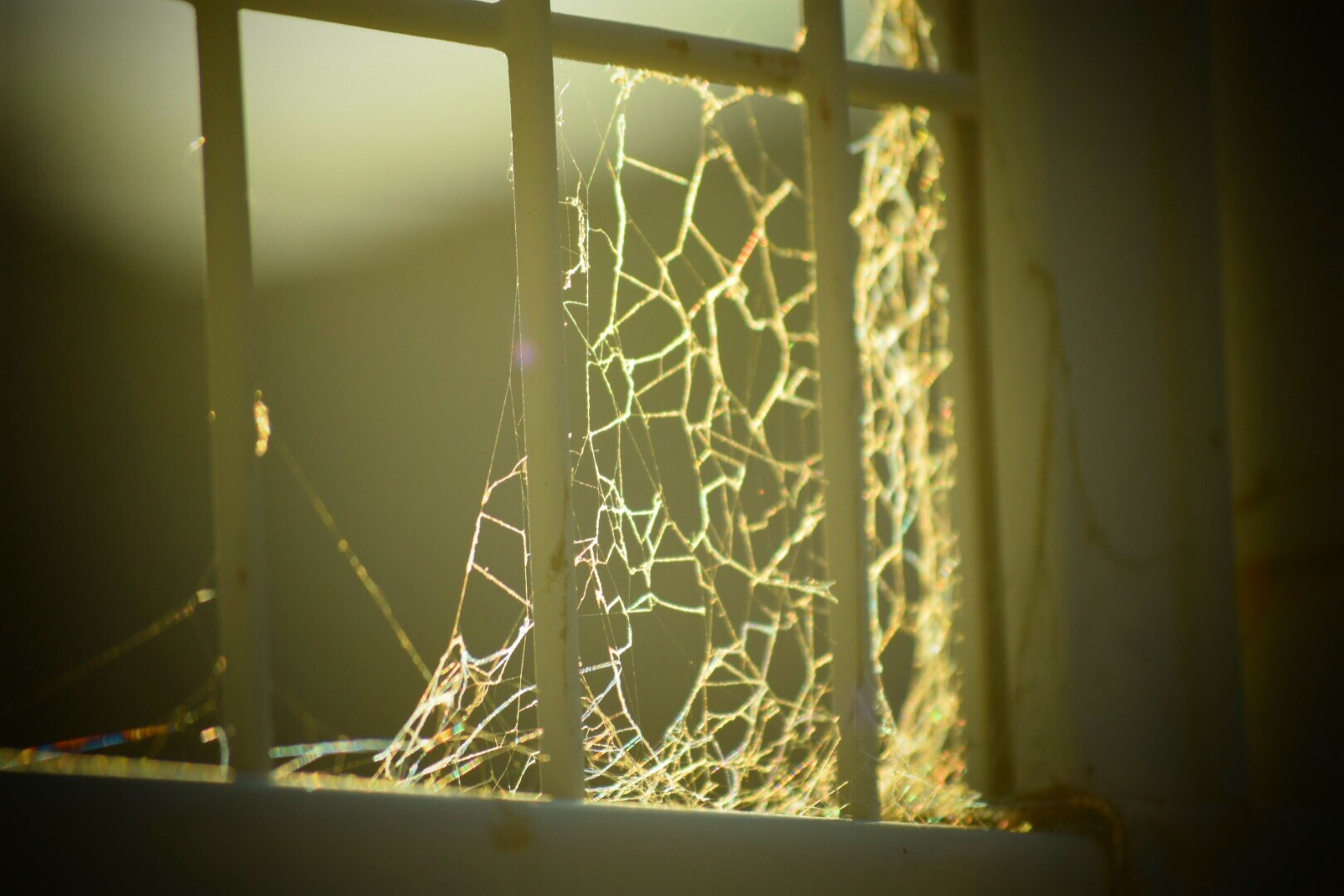 indoors, window, home interior, close-up, focus on foreground, transparent, curtain, glass - material, wall - building feature, sunlight, no people, metal, pattern, day, selective focus, built structure, railing, house, wall, spider web