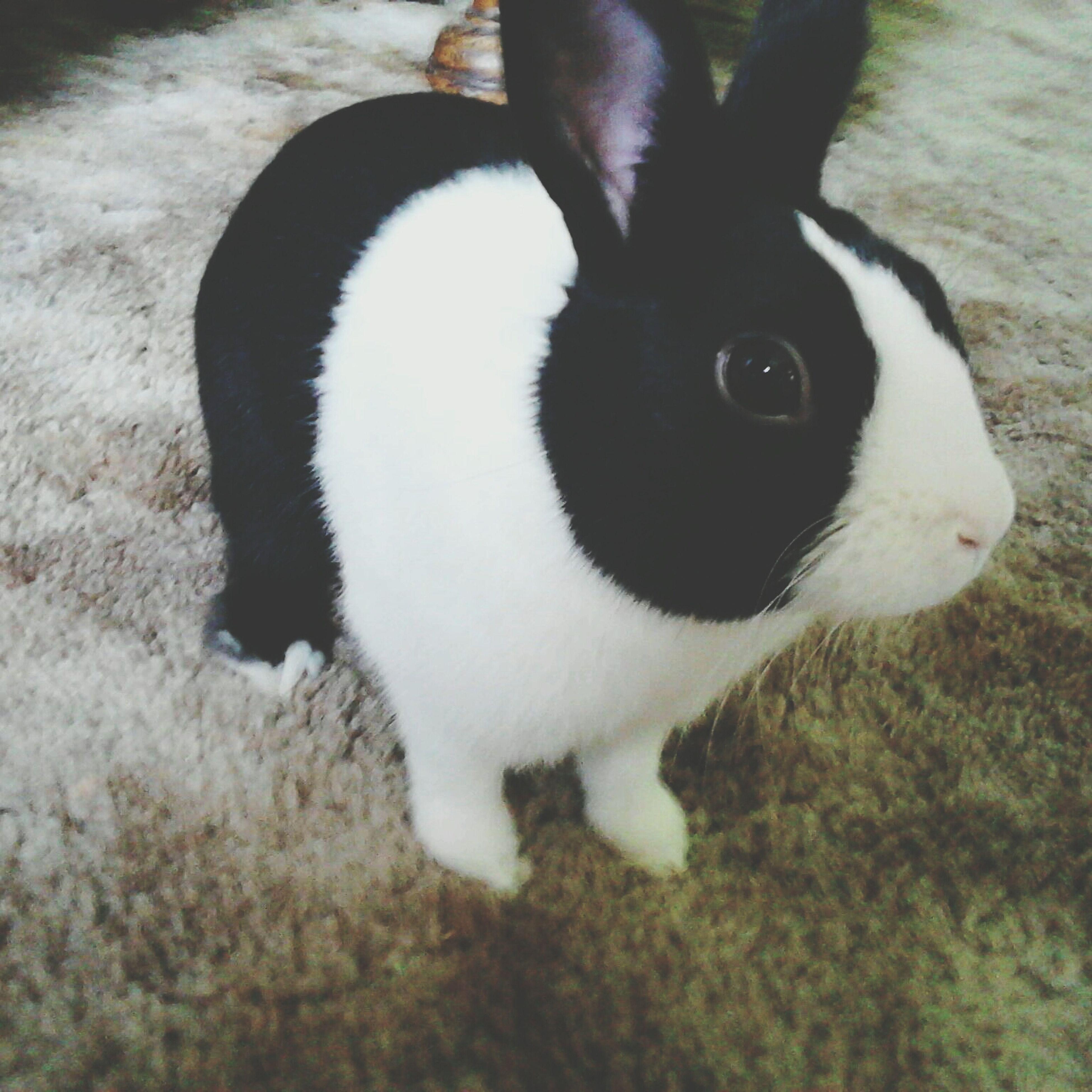 Hankel Lloyd :3 Hank My Little Lovebug Rabbit Animal First Eyeem Photo