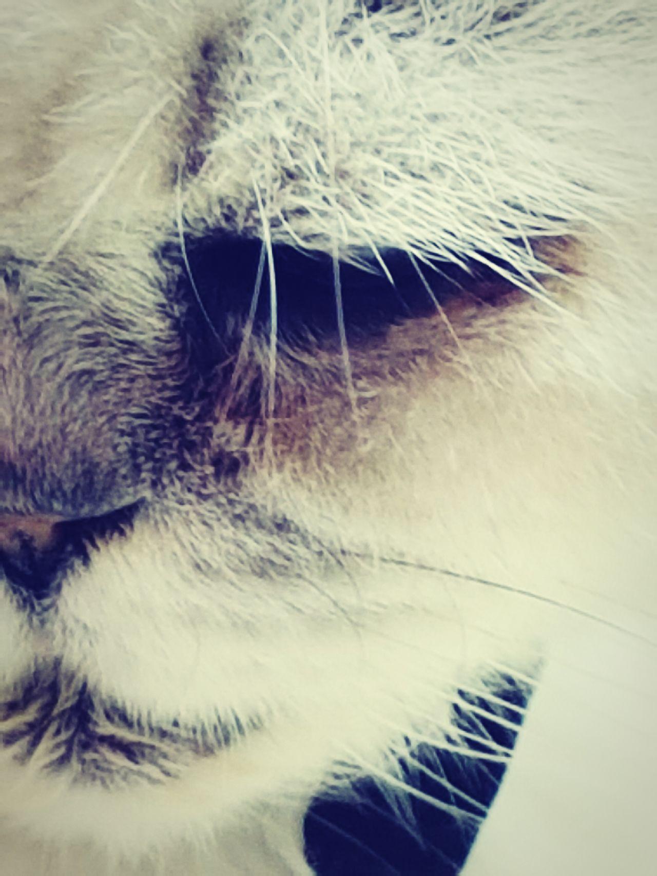 My Cat Freddie