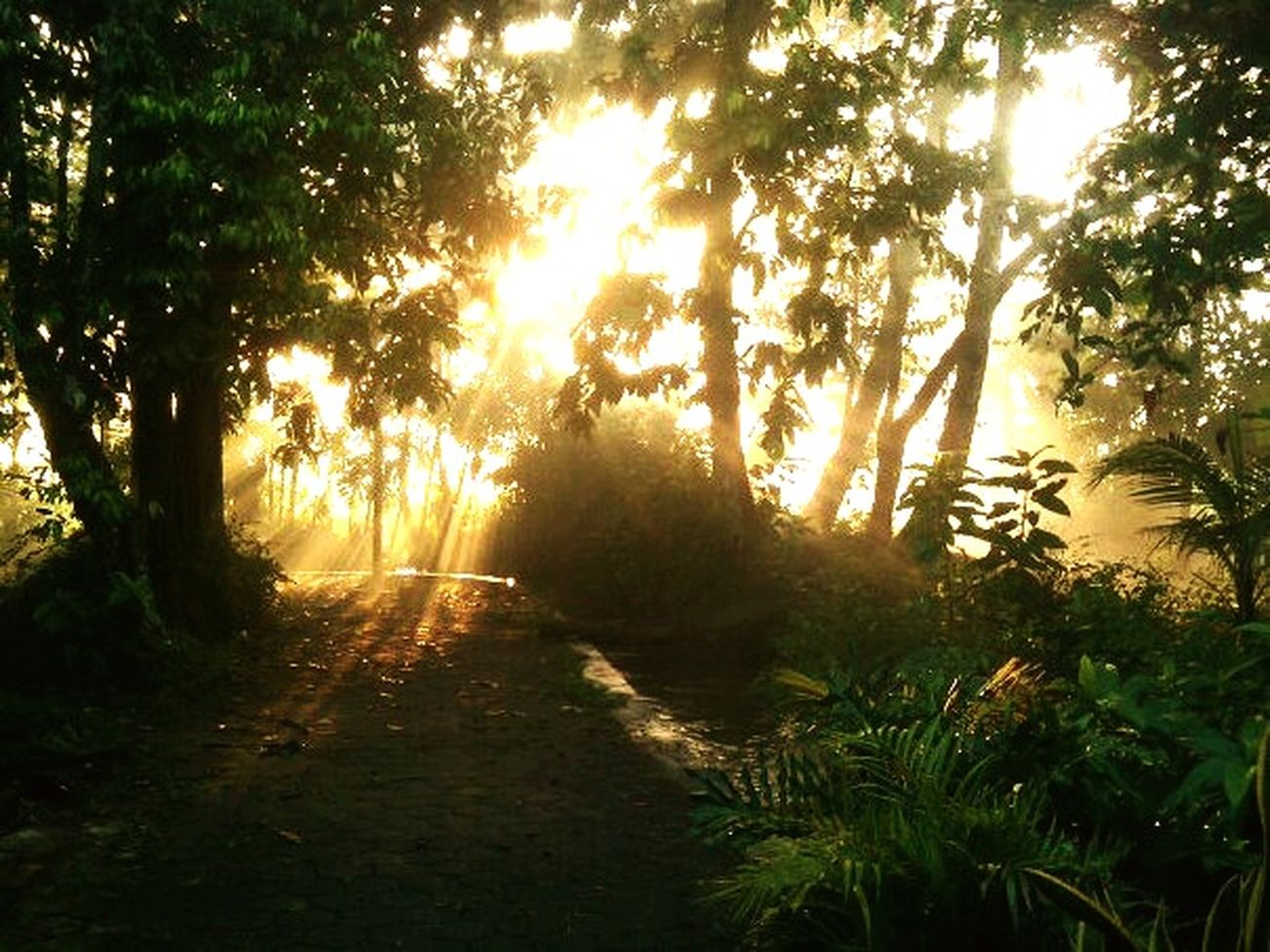 Morning Morning Light Sewon Jogjakarta Kangen Sewon