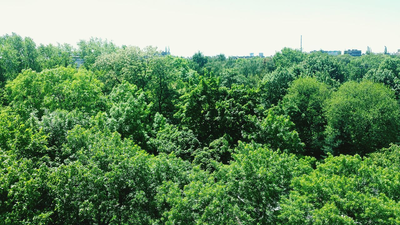 tree, green color, nature, forest, green, growth, lush foliage, day, beauty in nature, no people, outdoors