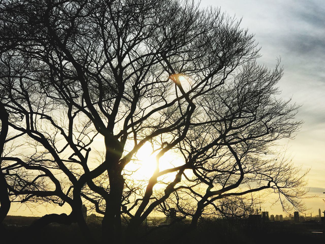 Tree Nature Sunset Sky Branch Beauty In Nature Sun Bare Tree Sunlight Tranquility No People Growth Outdoors Silhouette Tranquil Scene Scenics Day Greenwich Park London The Week Of Eyeem Sony A6300
